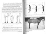 strana 26-27